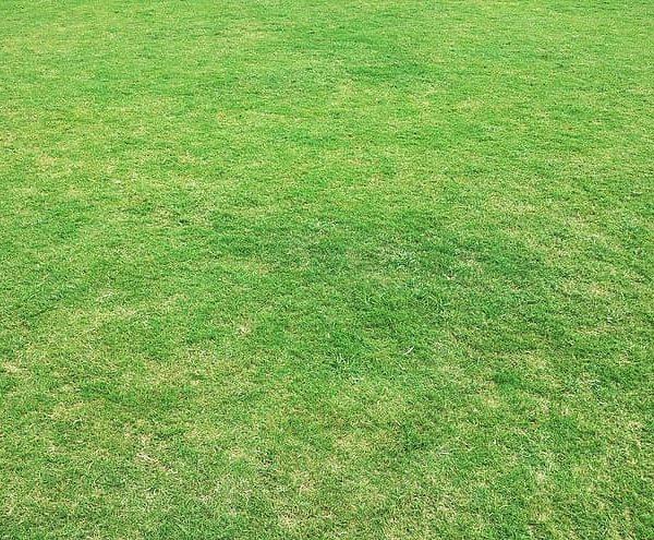 Opter pour une pelouse synthétique pour décorer son jardin